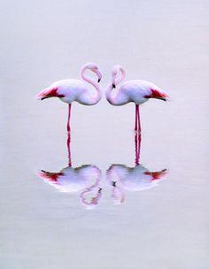 Flamingos twice by Costa Dino's by Suzi n Pretty Birds, Love Birds, Beautiful Birds, Animals Beautiful, Pretty In Pink, Beautiful Beach, Flamingo Art, Pink Flamingos, Flamingo Gifts