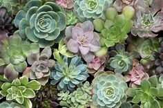 you can never have too many succulents!