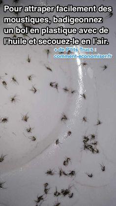 Enfin une Astuce Pour Attraper les Moustiques FACILEMENT.