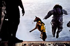 A U.S. Soldier with the 10th Special Forces Group and his military working dog jump off the ramp of a CH-47 Chinook helicopter from the 160th Special Operations Aviation Regiment during water training over the Gulf of Mexico March 1, 2011. - Perfectly Timed Photography 2  Best of Web Shrine
