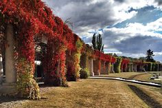 Autumn in Pergola