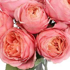 FiftyFlowers.com - Pink Antique Garden Rose
