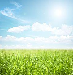 Environmentally Friendly Lawn Care