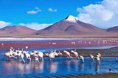 Laguna Colorada, sud Lipez, Bolivie (c) Byelikova_Oksana