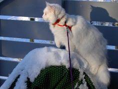 White as snow!