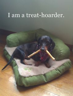 """I am a treat-hoarder."" ~ Dog Shaming shame - Doxie treat-hoarder"