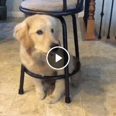 It seems this dog is stuck inside the chair lie stuck Funny Dog Videos, Funny Dogs, Cute Puppies, Dogs And Puppies, Dog Fails, Animated Gif, Best Dogs, Dog Lovers, Hilarious