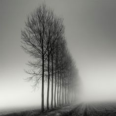 Swiss photographer Pierre Pellegrini shoots some phenomenal long-exposure photographs of trees. The strong perspective and foggy atmosphere seemingly ever-present in his work creates images that are both beautiful and eerie. You can see hundreds more of his images over on Art Limited and on his personal website.