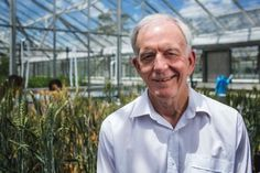 A new photosynthesis discovery may help breed faster-growing wheat crops that…