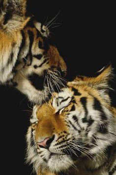 motivationsforlife:  Brothers Kiss by Edward Lochmann //...