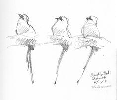 "Broad billed motmot, three poses, one bird. Drawn through the scope. 6B pencil on Robert Bateman sketchbook 8 1/2"" x 11"". Barro Colorado Isl..."