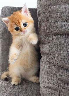 ودى كيتى وهى عندها 40 يوم كل واحد يورينا القمر اللي عنده #cats #cattoys #catowners