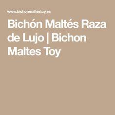 Bichón Maltés Raza de Lujo | Bichon Maltes Toy