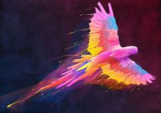 Birds flying with colourful wings .