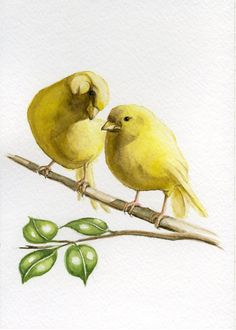 Yellow canary bird painting 5X7 prints from original watercolor painting pet birds home and garden birds earthspalette. $10.00, via Etsy.