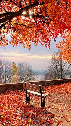 Let me sit outside, enjoy the fall colors and just be at peace with the world. Autum Leaves, Autumn Leaves Falling, Landscape Photography, Autumn Photography, Beautiful Sunset, Beautiful Places, Beautiful Nature Scenes, Beautiful Landscapes, Relaxing Pictures