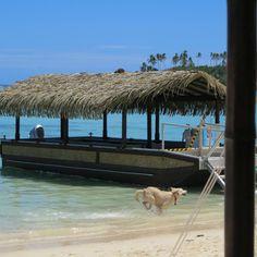 Pacific Resort Rarotonga (Muri, Cook Islands) - Resort Reviews - TripAdvisor Cook Islands Resorts, Island Resort, Trip Advisor, Hotels, Spaces, Cooking, Travel, Animals, Kitchen