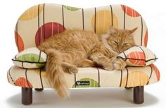 Home decor has gone to the dogs ... and cats | SILive.com