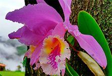 Ven a disfrutar de un maravilloso clima y una fantástica vegetación en nuestras acogedoras instalaciones. #ConucoColibrí #Sanare #Lara #Venezuela #jardíndeLara #flor #orquídea #clima #neblina #frío #naturaleza #natural #vegetación #planta #jardín #living #conuco #colibrí #posada #artesanal #acogedora #instalaciones