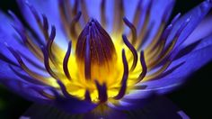 More Effective than Painkillers: Blue Lotus Relieves Migraines, Chronic, and Muscle Pain http://www.corespirit.com/effective-painkillers-blue-lotus-relieves-migraines-chronic-muscle-pain/ &HCATS%