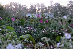 Vegetables and summer flowers. #kitchengarden #growfood #garden #gardening #potager #vegetables