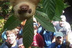 Un paresseux surgit sur la photo d'un groupe d'étudiants au Costa Rica