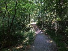 hainich_nationalpark71