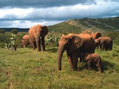 Elephants at Woodall Addo, accommodation.