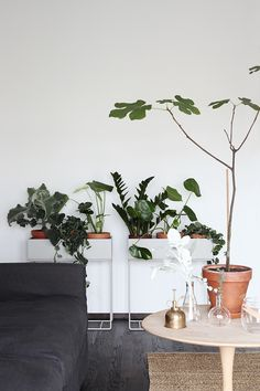 Susanna Vento for Sato - lovely green plants in Ferm Living plant stands Interior Plants, Interior Exterior, Home Interior, Interior Styling, Room Inspiration, Interior Inspiration, Interior Ideas, Plantas Indoor, Plant Box