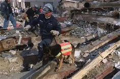 """Trakr dogTrakr was a German Shepherd police dog who helped find survivors in the rubble of New York's World Trade Centre on September 11, 2001. Trakr was recognized as the most """"clone-worthy"""" canine by BioArts International. As the result, he was cloned, producing five puppies in June 2011."""