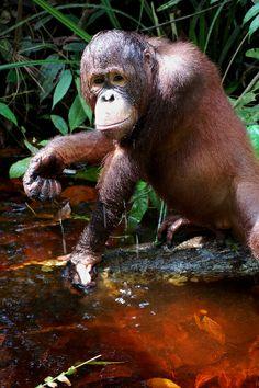 2013-05_Forest-School-mud_rra_014 pela fundação do orangotango, via Flickr