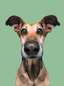 Eye contact helps bond with humans by Elke Vogelsang / Contact Help, Vet Clinics, Pet Photographer, All Pictures, Profile Pictures, Background For Photography, Great Shots, Animal Photography, Photography Ideas