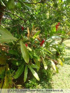 herbs Herbs, Plants, Herb, Plant, Planets, Medicinal Plants