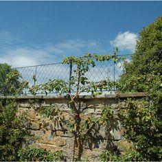 Modern Backyard Garden Wall top trellis panels and posts. Use as privacy trellis on your garden wall. Garden Trellis Panels, Privacy Trellis, Metal Trellis, Trellis Fence, Trellis Ideas, Door Canopy Designs, Door Canopy Porch, Porch Awning, Front Porch