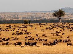 Serengeti National Park Game Reserve, Tanzania