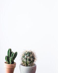 ป ก พ น โ ด ย pimnipa thanupran ใ น green ใ น ป 2019 обои обои для телефона Plant Wallpaper, Wallpaper Iphone Cute, Ombre Background, Plant Background, Pretty Backrounds, Cactus Photography, Living Room Plants, Mickey Mouse Wallpaper, Plants Are Friends