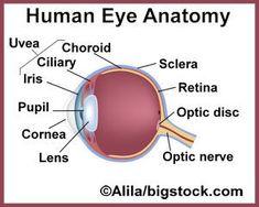 doterra for eyesight: better vision, presbyopia, cataracts, macular degeneration, glaucoma, retinal detachment, iritis/uveitis