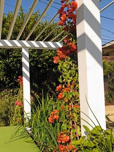 Stay cool this summer with our best shade-making ideas from Jamie Durie and…
