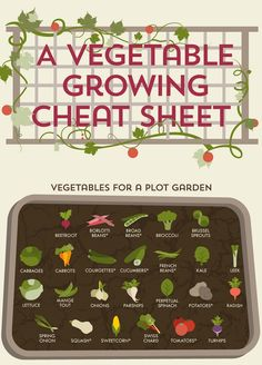 Infographic: A Cheat Sheet For Growing Vegetables At Home - DesignTAXI.com