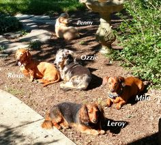 My pack! August 2015. All enjoying a lazy day soaking up the sun.❤️