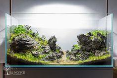 90x45x45 Sieryu Aquascape - 10 | Flickr - Photo Sharing!