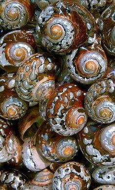 #shells #pattern