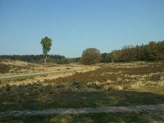 Zilvense heide - Loenermark, Veluwe