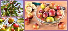 Vejamos agora quais são esses benefícios e como o consumo  dessa fruta pode nos ajudar:  1. Tratamento de doenças 2. Fortalece as nossas defesas 3. Ação antioxidante 4. Deixa a pele mais jovem 5. Aumenta a absorção de ferro
