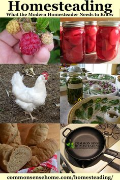 Get Started Homesteading - Become more self-reliant with gardening, food storage, homestead animals, home remedies, recipes, solar, preparedness and more.