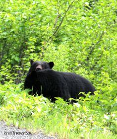 Peek-a-Boo! Alaska B