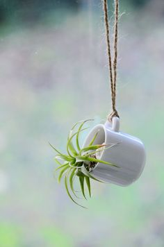 Mini Hanging Vase Planter for succulent water by MyLittlePlants