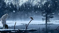 White owl wallpaper birds animals wallpapers for free download 1920×1080 White Owl Wallpapers (42 Wallpapers) | Adorable Wallpapers