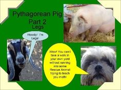 """Pythagorean Pig Part 2 features """"Legs"""" (the goat) a teacher at Pythagorean Pig's School and several of The Rescue Dogs.  Only covers finding a leg using the Pythagorean Theorem.  Fully editable (except for restricted graphics pages) in powerpoint form."""