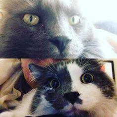 Cat selfies make me so happy. #JakeandElwood #catsofinstagram #caturday